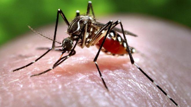 _87953765_c0093043-feeding_mosquito-spl
